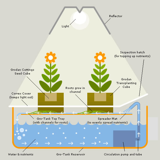 a research on hydroponics a soilless method of growing plants Soilless cultivation - what makes a good  the first term used for soilless growing medium systems was 'hydroponics' by  by canna research soilless culture.