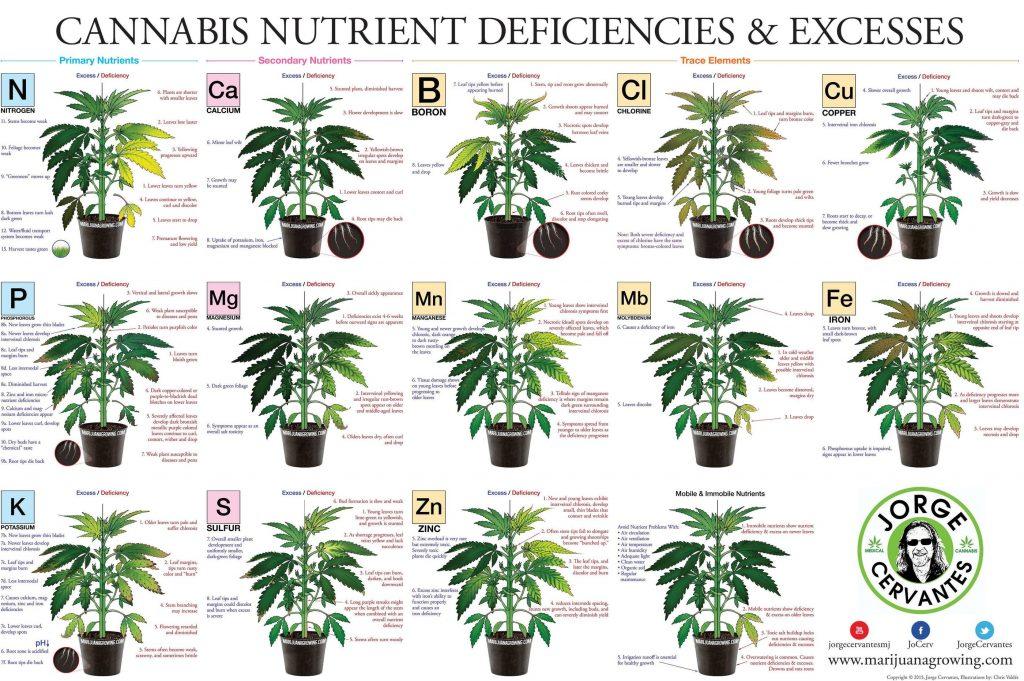 Marijuana Fertilizer Ingredients How To Grow Weed Indoors
