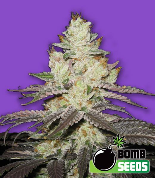 Atomic Bomb Seeds
