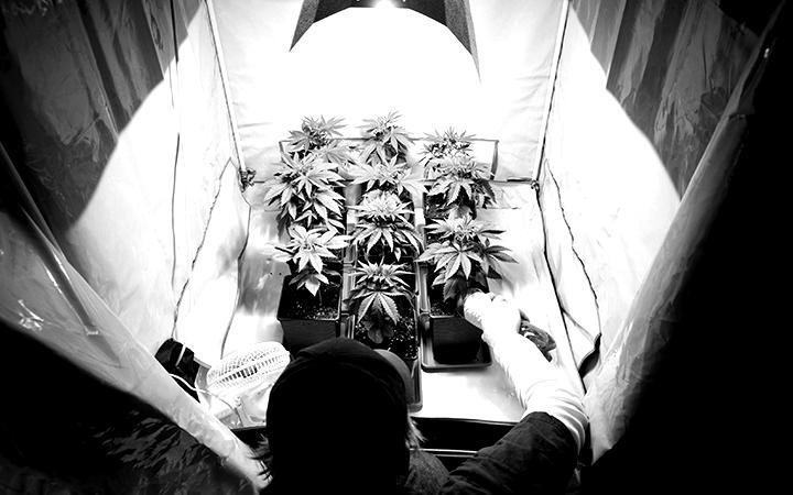 How to Grow Marijuana Indoors (Simple Guide)