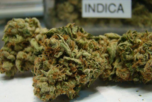 Snoop-Dogg-Weed-Strain