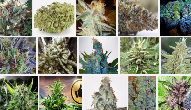 marijuana strains 2017
