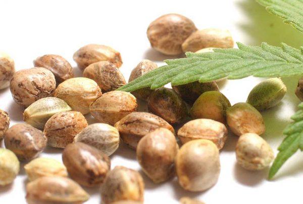 Best Marijuana Seedbank