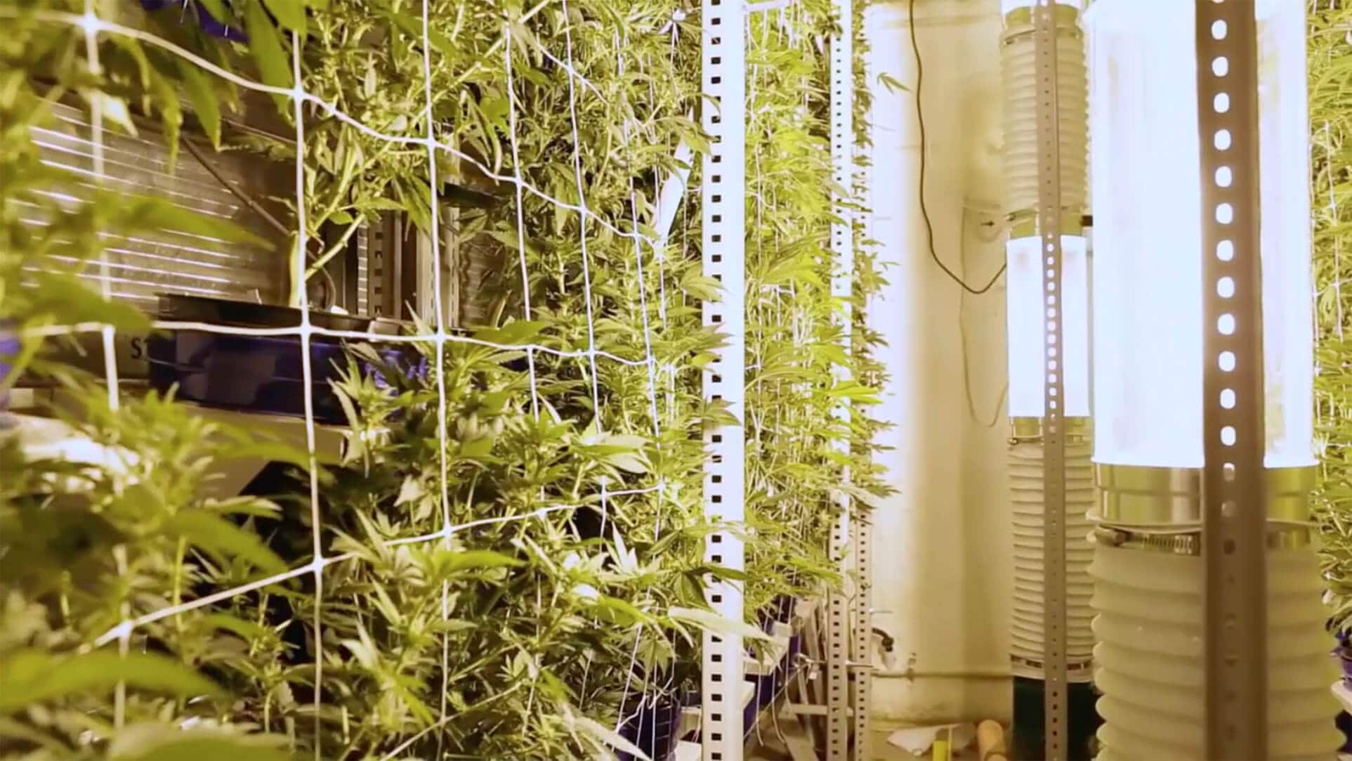 Marijuana Grow Space