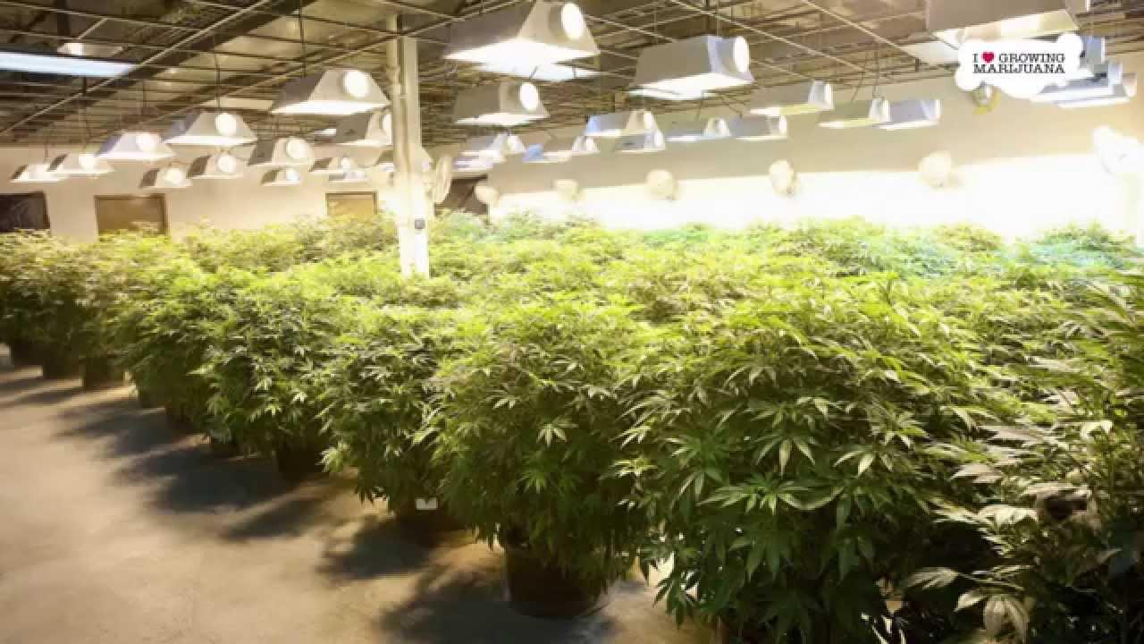 best light growing indoors