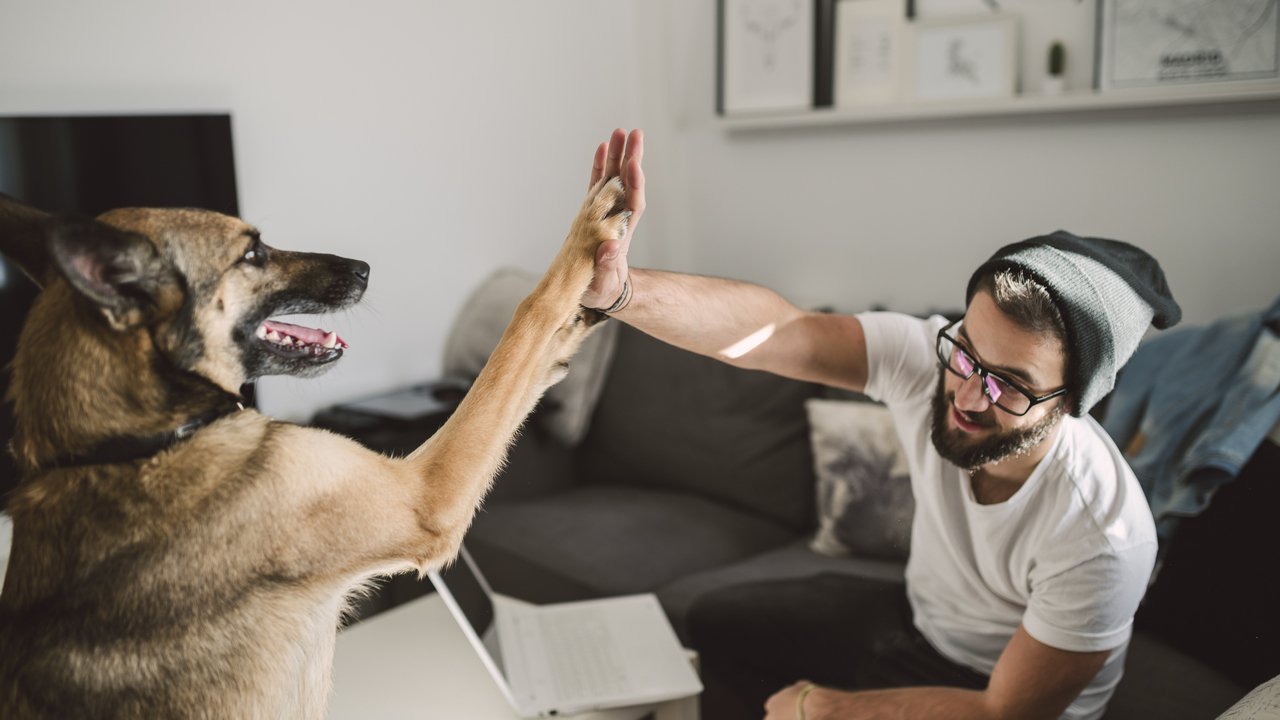 CBD Oil for Pets in Australia: Everything you Need to Know